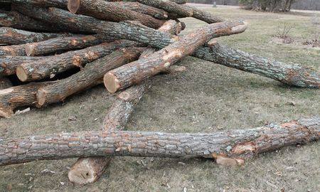 Logs that rolled
